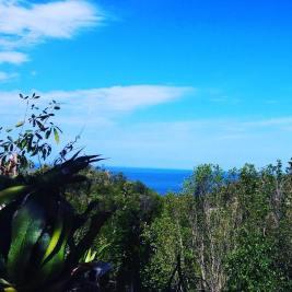jamadda.jamaica_12918020_782010618601567_1665398664_n