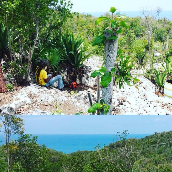 jamadda.jamaica_13126788_1753070901580866_1842679816_n